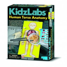 Human Torso Anatomy CIENCIA 4M